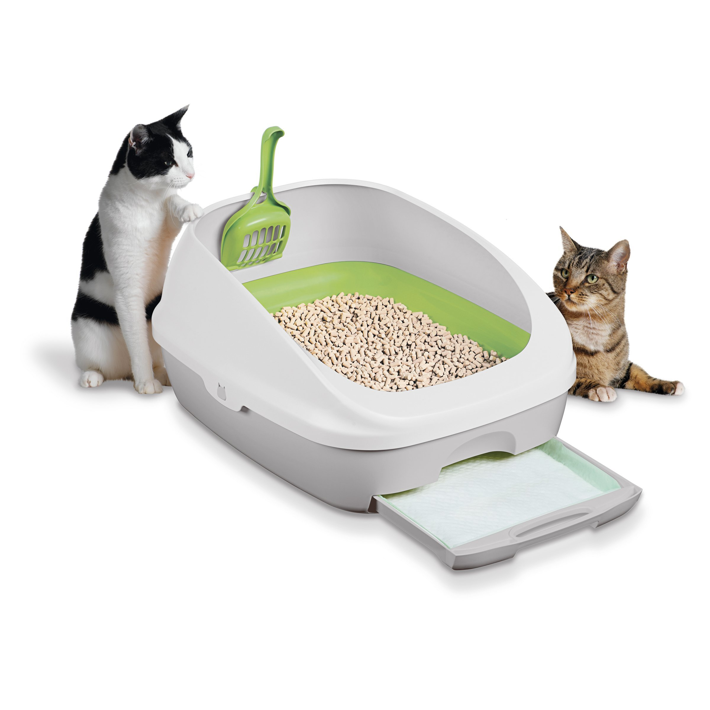 raw diet for older cats