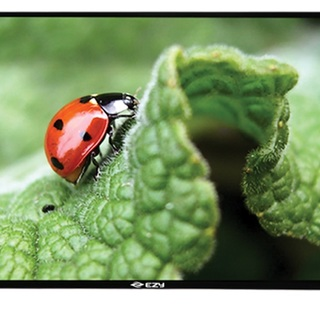 "EZY 55D309-55"" FULL HD TV"