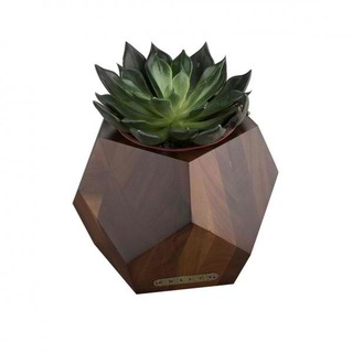 Accent Succulent Pot in Walnut Natural Finish